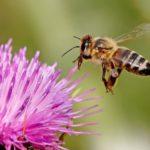 ¿Qué es la miel multifloral y cuáles son sus propiedades?