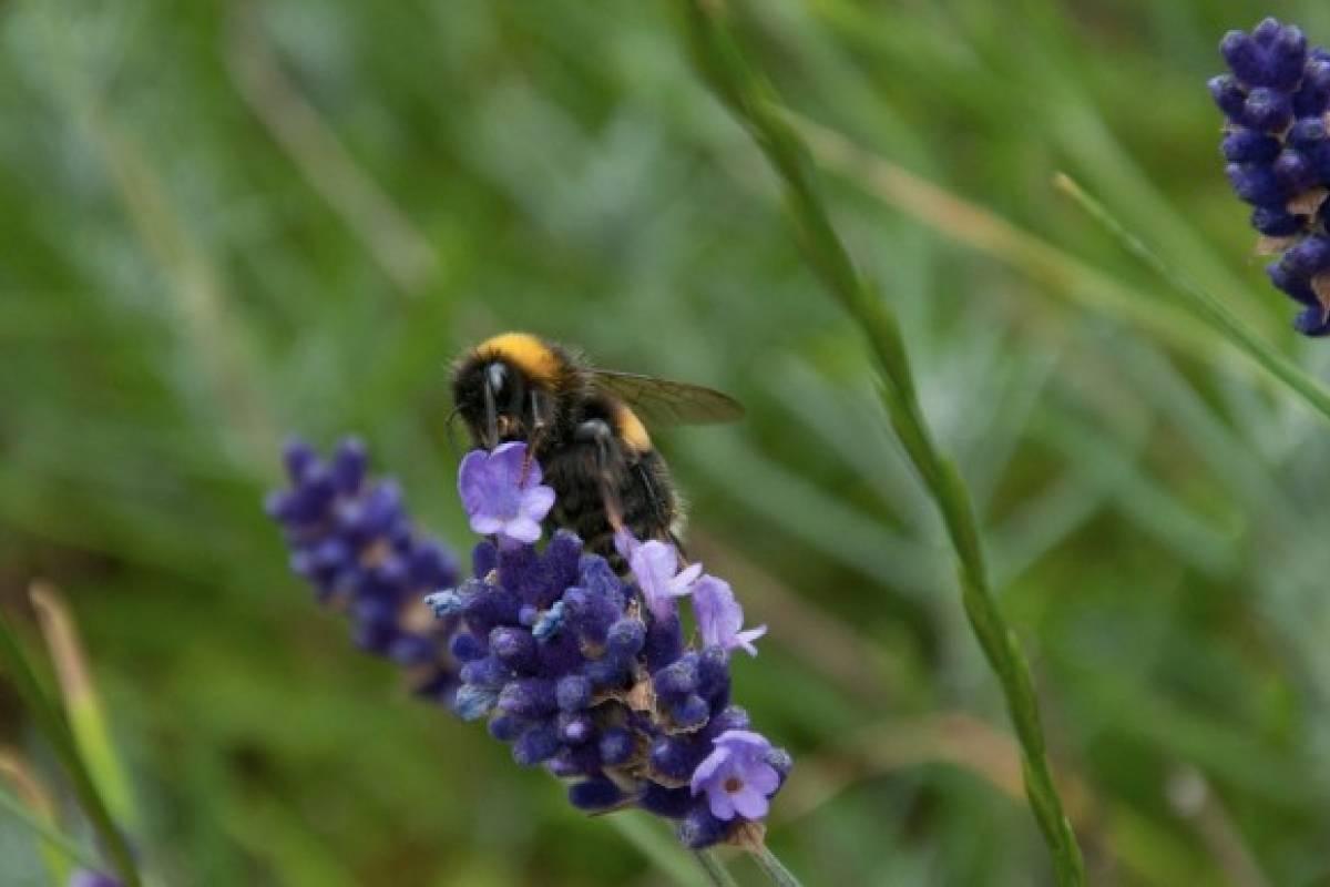 ¿Cuáles son las propiedades de la miel de cantueso?